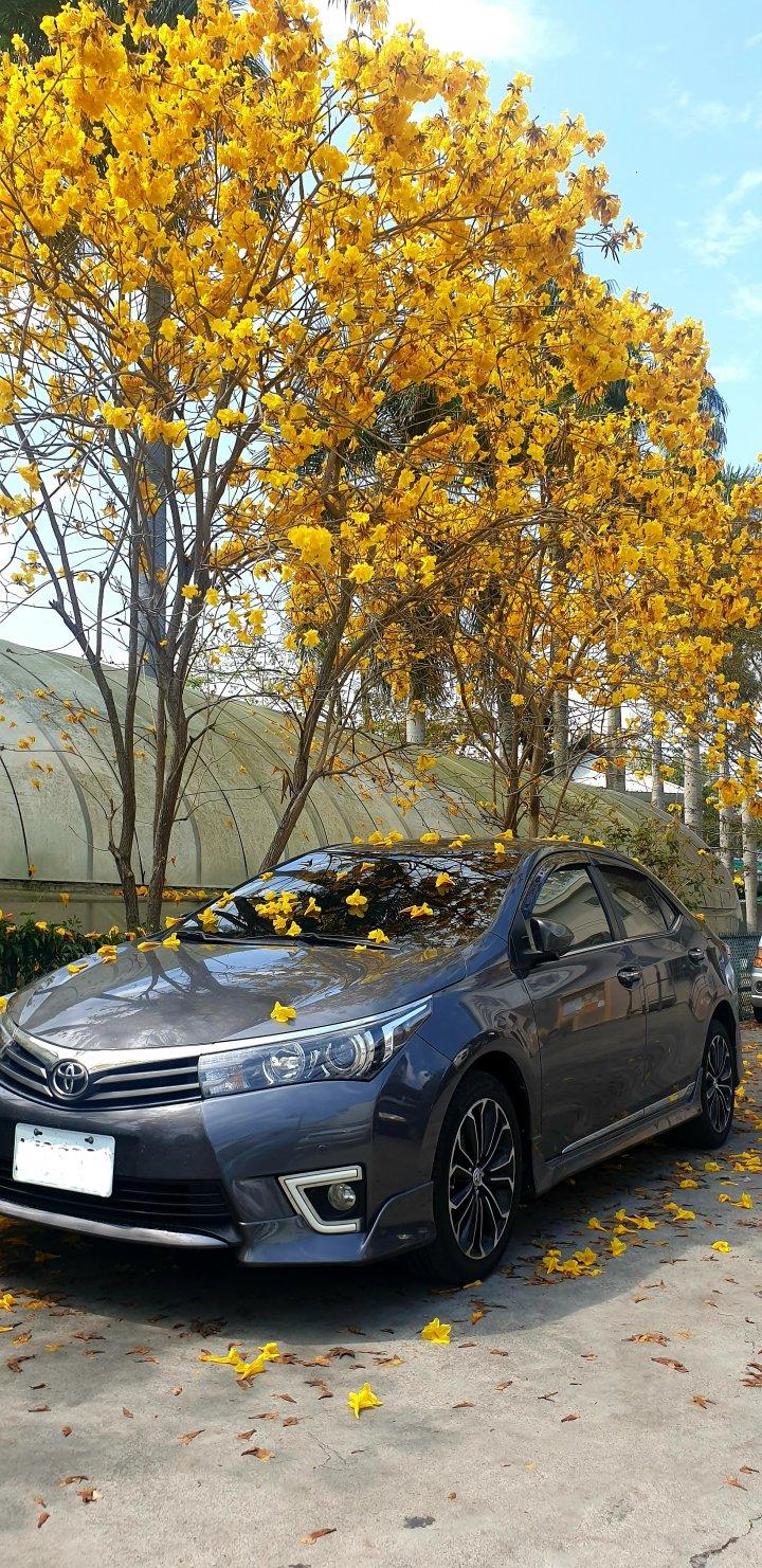 2015年式 Corolla Altis Z版雲河灰(無天窗版、17吋原廠輪框、原廠換檔撥片)